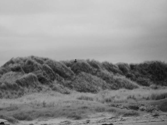 'The grasses', 2010.